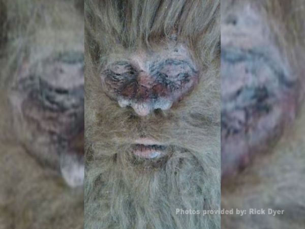 Bigfoot shot and killed? Photos released