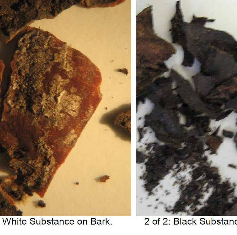 Analysis of Black and White Substances on the Surfaces of Bark involved in a Close Encounter with an Unknown Circular Craft (Monroe, New York, Early 1980s)
