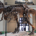 Sue the Dinosaur and the Story that Shook Archaeology