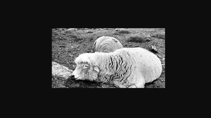 The Dugway Sheep Incident, 1968