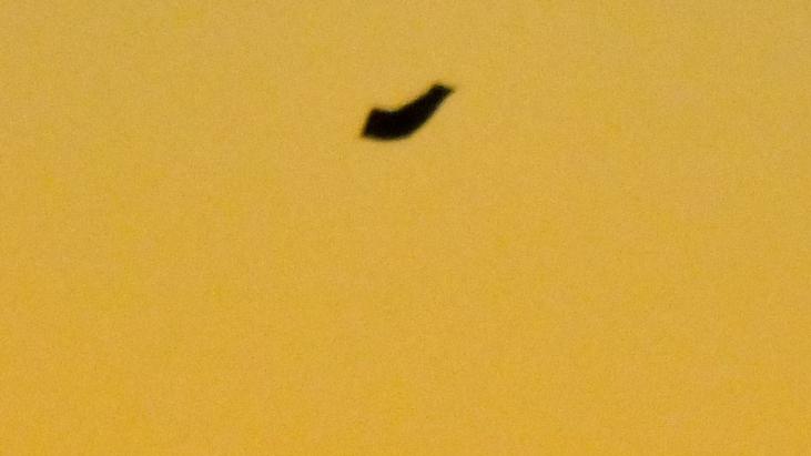 Strange Object Photographed in Busselton, Western Australia