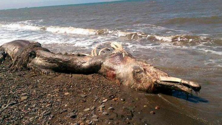 'Mysterious' sea creature with furry tail washes ashore in Russia's Far East