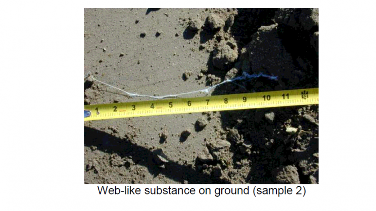 Analysis of a Web-Like Substance Encountered October 14, 2005 and October 17, 2005 in Northeastern Colorado