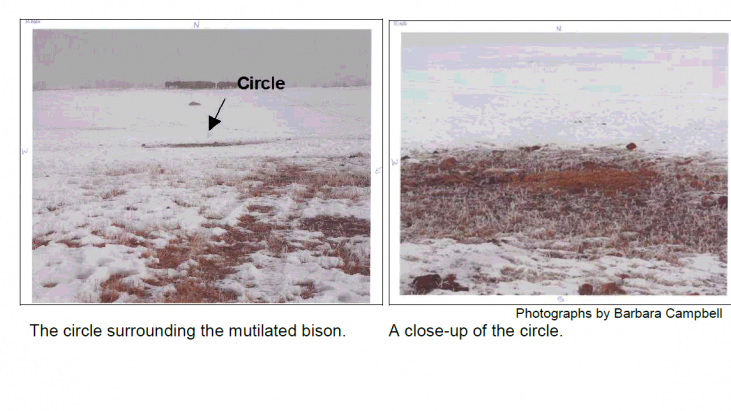 Analysis of Samples Related to a Bison Mutilation in Saskatchewan, Canada (Discovered March 13, 2008)