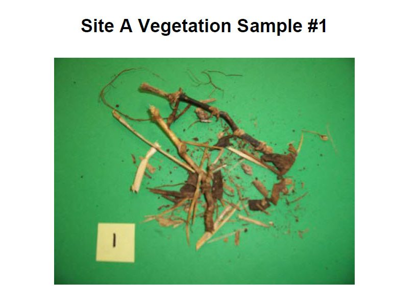 Analysis of Vegetation and Soil after Contact with a Glowing Metallic Object (Miami, Florida, January 2, 2011)