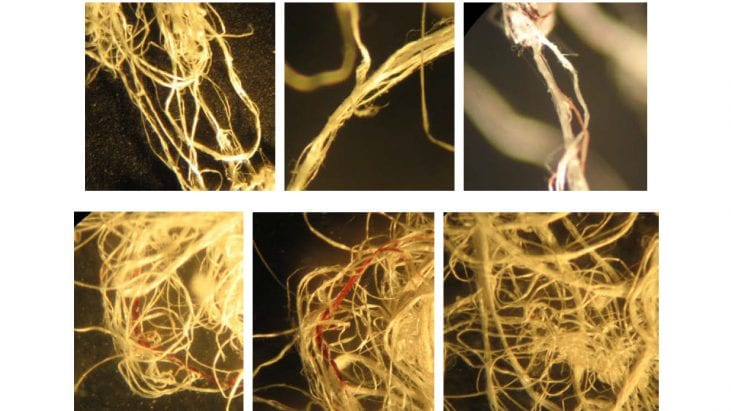 Analysis of an unknown White Fibrous Substance, aka 'Angel Hair', Deposited by Barbell-Shaped UFOs (Illinois, November, 4, 2016)