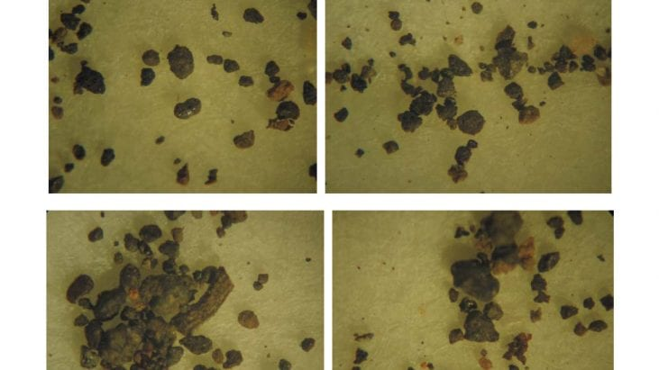 Analysis of Soil Samples from the Travis Walton Abduction Site (Apache-Sitgreaves National Forest, Near Heber Arizona)