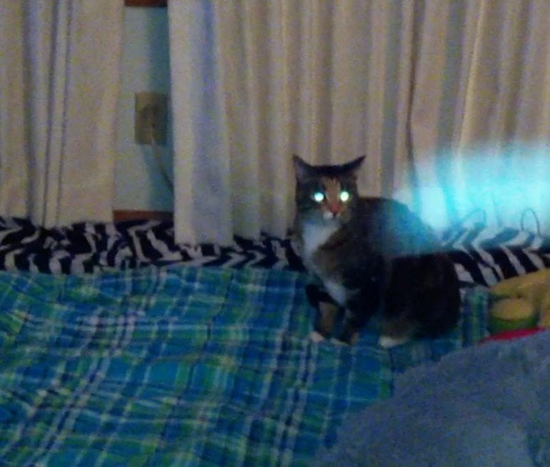 Unknown Orb / Object Appears in Video While Taking Video of Cat