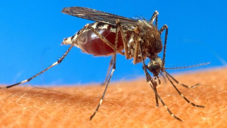 Entomological Warfare